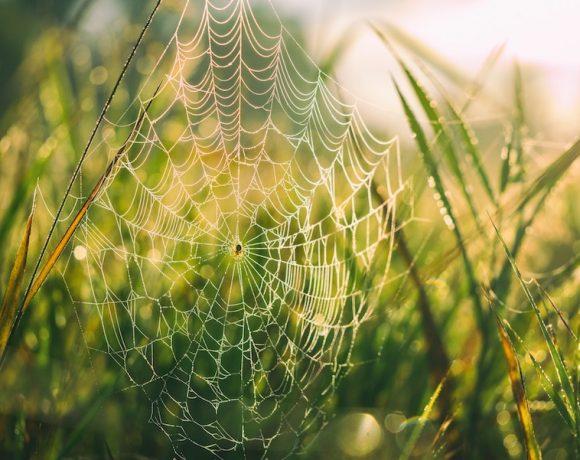 Morso di ragno: come curarlo