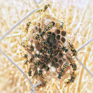 L'aspetto di un nido di vespe
