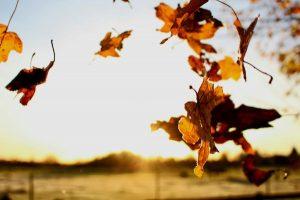 Vitamine per la pelle del viso in autunno.