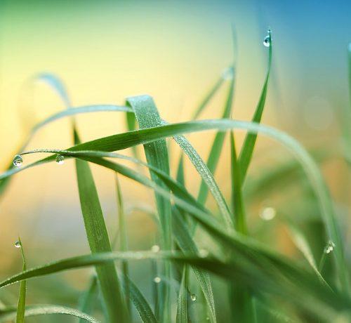 Erba, piante urticanti, insetti possono provocare forme anche serie di dermatite da contatto.