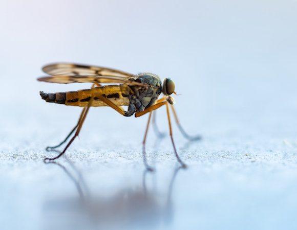 A cosa servono le zanzare e perché pungono l'uomo?