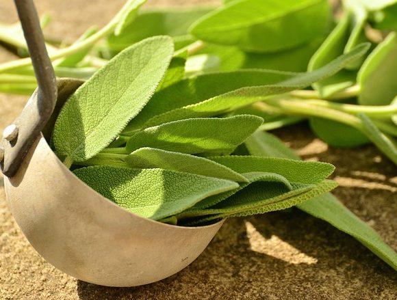 Dalla cucina alla pulizia dei piedi, la salvia è un ingrediente utile in molti rimedi beauty