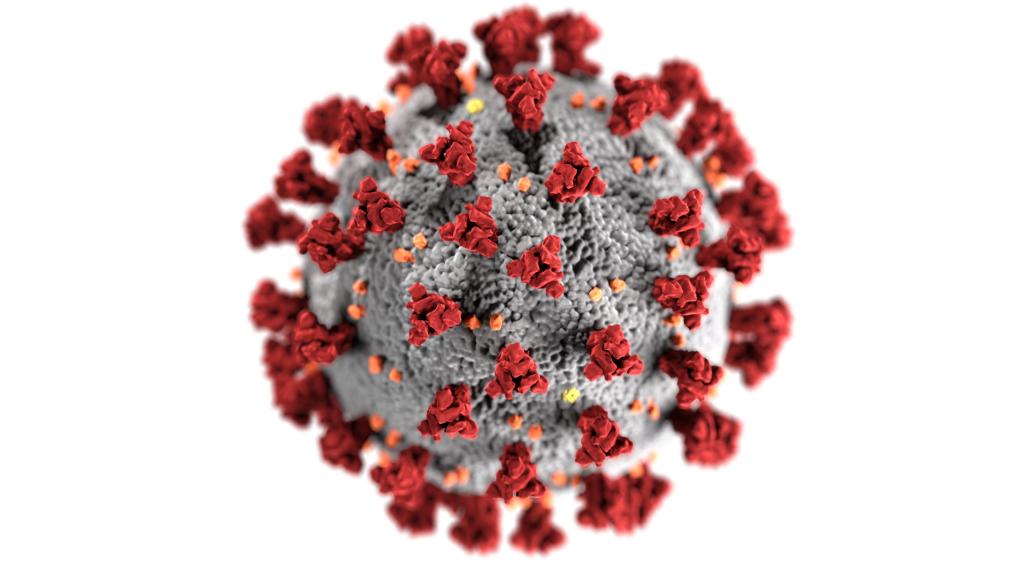 Effetti collaterali coronavirus: la perdita di capelli