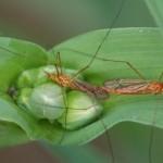 Cosa succede alla tua pelle quando vieni punto da una zanzara